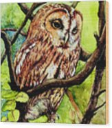 Owl From Butterfingers And Secrets Wood Print by Morgan Fitzsimons