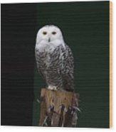 Owl Wood Print by Gouzel -