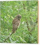 Owl II Wood Print