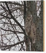 Owl In Winter Wood Print