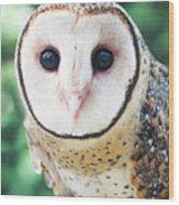 Owl Insight Wood Print