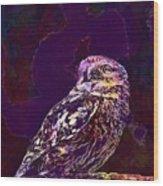 Owl Little Owl Bird Animal  Wood Print