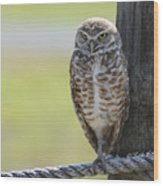 Owl On A Rope Wood Print