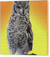 Owl On Branch Wood Print
