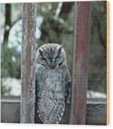 Owl On Deck Wood Print