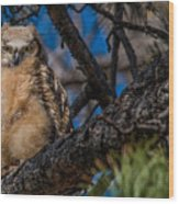 Owlet In A Fir Tree Wood Print