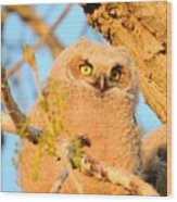 Owlet In A Spring Sunrise Wood Print