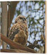 Owlet Lookout Wood Print