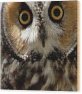 Owl's Eyes Wood Print