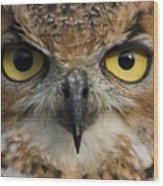 Owls Eyes Wood Print