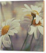 Oxeye Daisy Flowers Wood Print