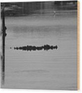 Oyster Bed Gator Wood Print