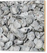 Oyster Shells On Cumberland Island Wood Print