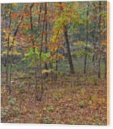 Ozark Forest In Fall 1 Wood Print