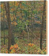 Ozark Forest In Fall 2 Wood Print