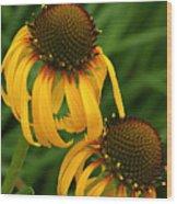 Ozark Yellow Coneflowers Wood Print