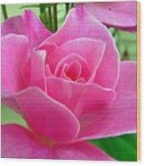 p1050202b  Pink Rose Wood Print
