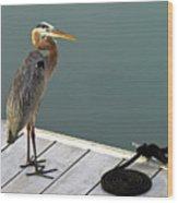 P1104117 Great Blue Heron Wood Print