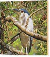 P2024983 Black Crowned Night Heron Wood Print