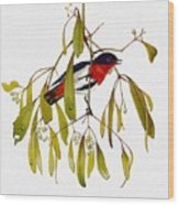 pa TonyOliver AustralianBirds 13 MistletoeBird Tony Oliver Wood Print