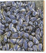 Pacific Blue Mussels Wood Print