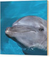 Pacific Bottlenose Dolphi Wood Print