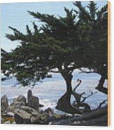 Pacific Cypress View Wood Print