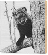 Pacific Fisher Wood Print