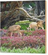 Pacific Grove Deer Feeding Wood Print