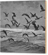 Pacific Gulls Wood Print