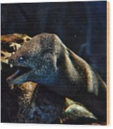 Pacific Moray Eel Wood Print