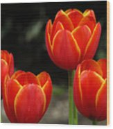 Pacific Northwest Tulips 5 Wood Print