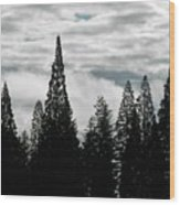 Pacific Pines Wood Print