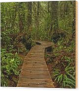 Pacific Rim National Park Boardwalk Wood Print