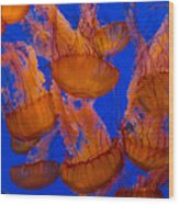 Pacific Sea Nettle Cluster 1 Wood Print
