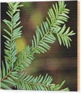 Pacific Yew Wood Print
