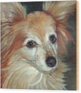 Paco The Papillion Wood Print