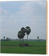 Paddy Fields Near Anantapur, Andhra Pradesh, India Wood Print