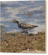 Padre Island National Park Wood Print