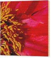 Paeonia 1 Wood Print