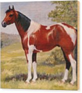 Paint Horse Gelding Portrait Oil Painting - Gizmo Wood Print