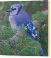 Painted Blue Jay  Wood Print