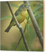 Painted Bunting Female Wood Print