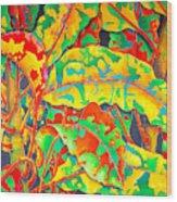 painted Crotons Wood Print by Daniel Jean-Baptiste