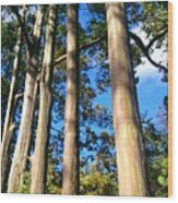 Painted Eucalyptus II Wood Print