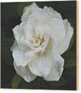 Painted Gardenia Wood Print