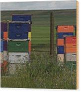 Painted Hives Wood Print