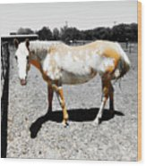 Painted Horse II Wood Print