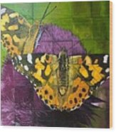 Painted Lady Butterflies Wood Print