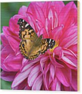 Painted Lady On Dahlia Wood Print